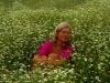 43 Blumen