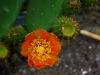 49 Kaktusblüten